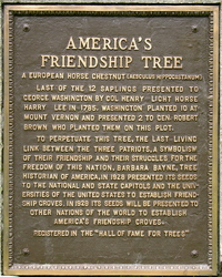 Friendship Tree Plaque